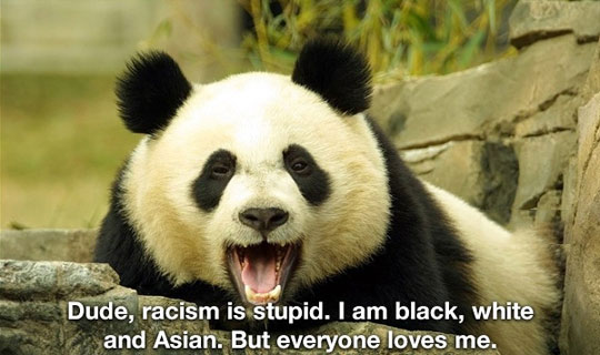 funny-panda-bear-black-white-asian